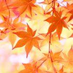 【もうすぐ秋】2018年秋アニメを紹介!【Part2】